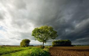 Awaiting the rain